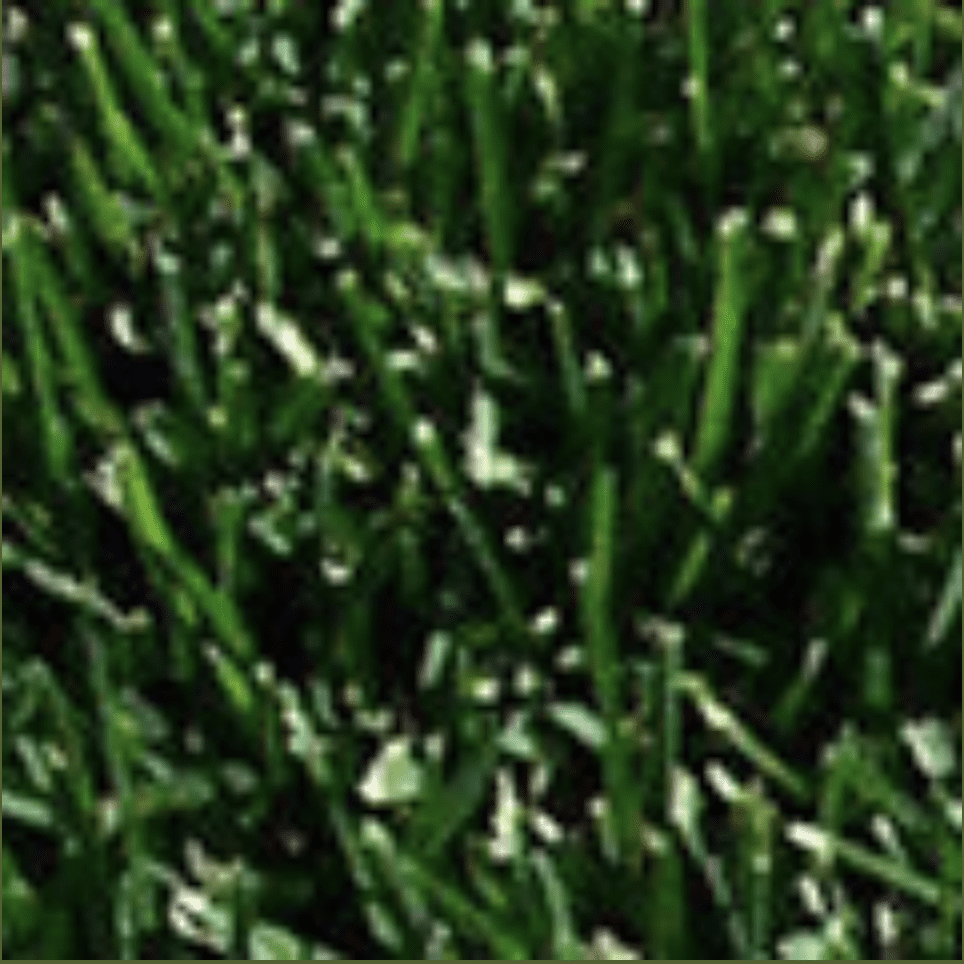 lawn aeration and seeding can keep your yard healthy