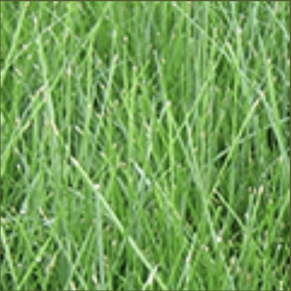 crew cuts lawn care can seed your lawn