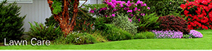 keep your lawn tidy and beautiful with crew cuts lawn care