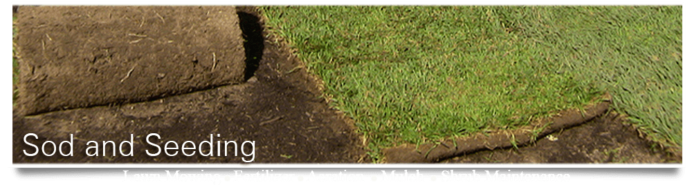 get sod and seeding services with crew cuts lawn care